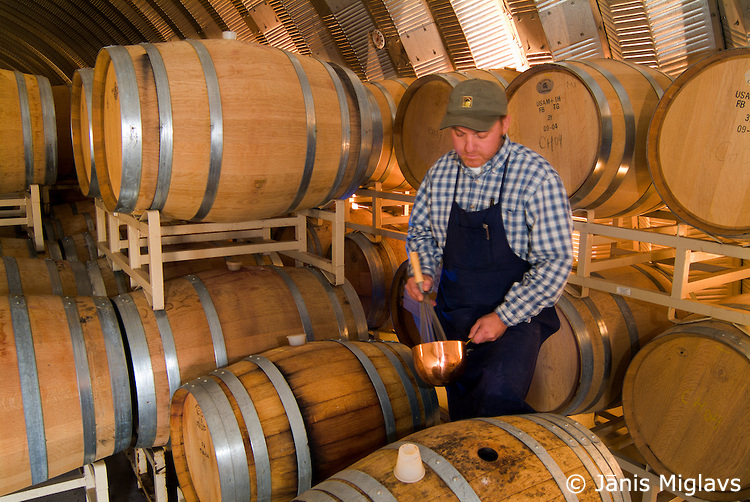 Winemaker Rusty Figgins surrounded by oak barrels, whippsup egg whites for part of the wine making process called fining at Cave B Winery in the Columbia Valley, Washington.